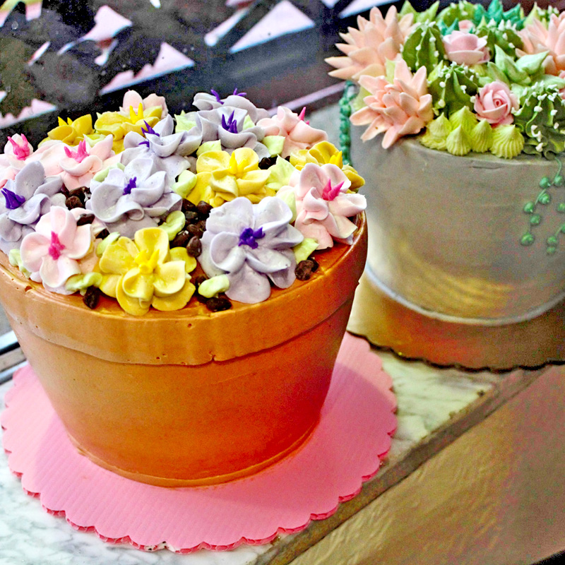 Petunias & Succulents Styles For Flower Pot Cake Designs